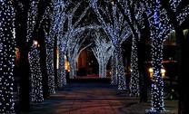 25m 250 Solar LED Fairy Lights